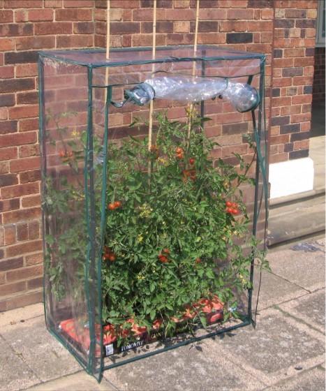 Tomaten-Gewächshaus zum Schutz vor Kälte und Nässe
