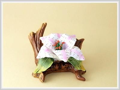 Porzellan Blume, Blüte weiß-rosa